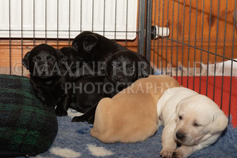 Weika Puppies 2 Mar 2019-8508.jpg