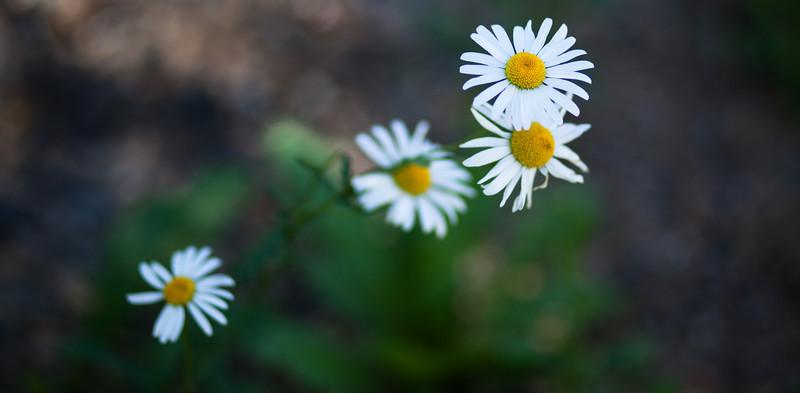 flower_253.jpg
