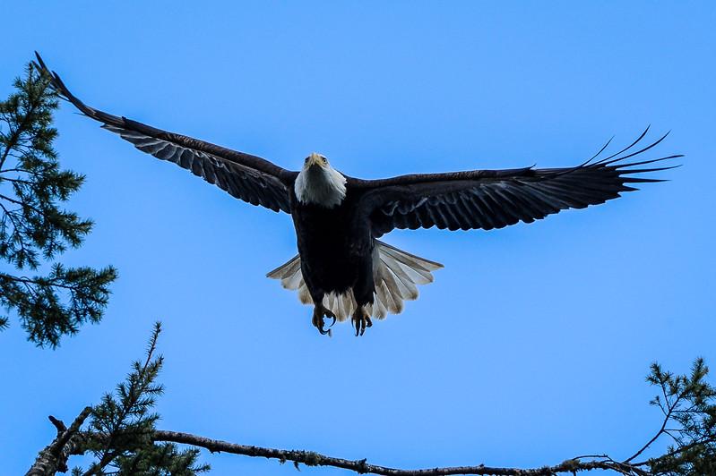 Sky Eagle