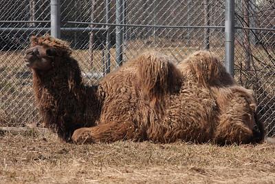 CAMELS #3