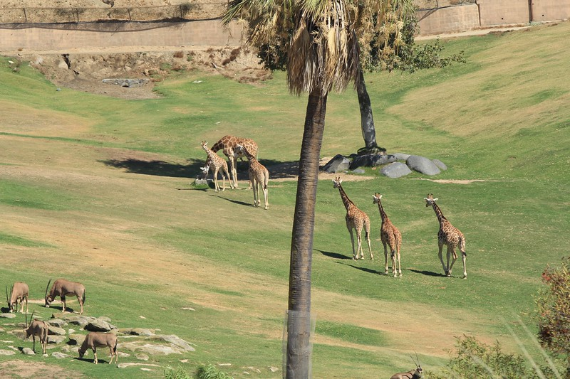 San Diego wild animal pakr 201700046.jpg