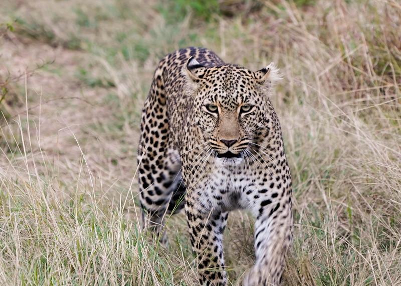 safari-2018-93.jpg