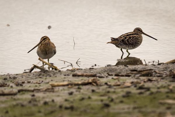 20181227-Port Aransas Birds and other