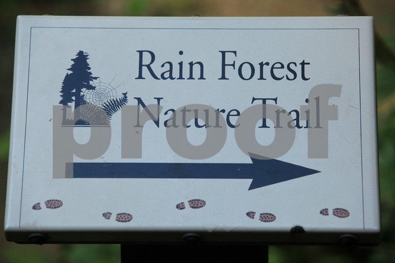rain forest nature trial, Quinault Lake, WA