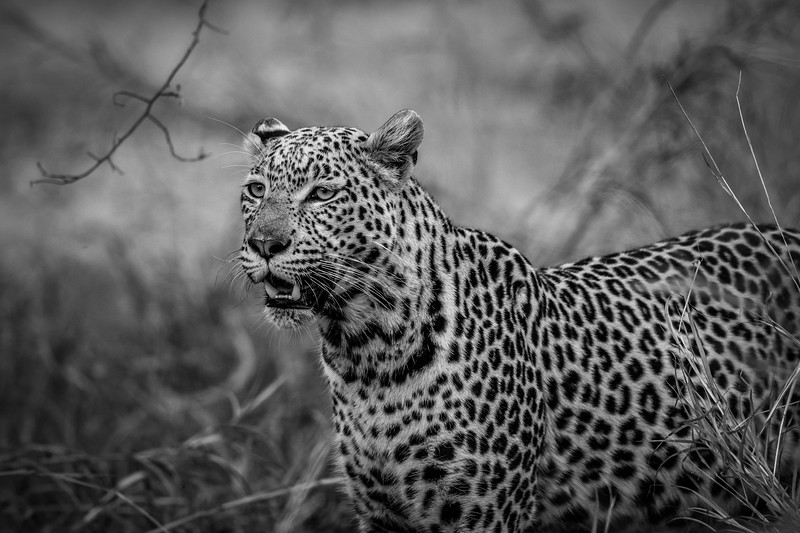 Botswana_June_2017 (3112 of 6179).jpg