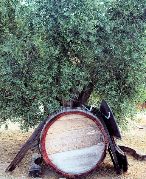 08_19 toulon pieracci barrel and tree DSC04426.JPG