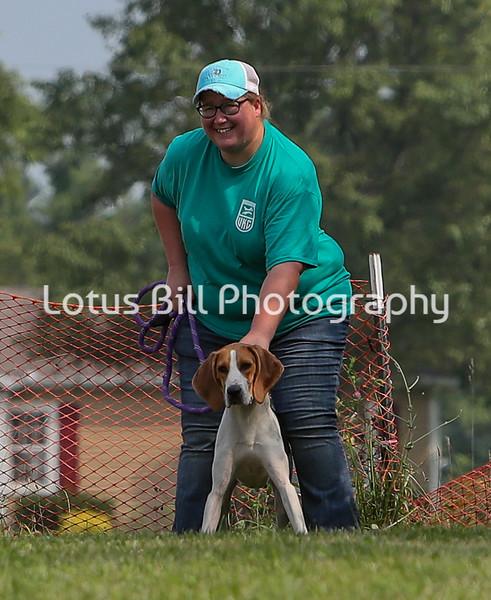 Lucy Treeing Walker Coonhound LSR3
