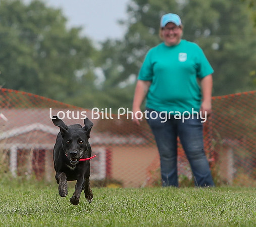 Tazzy Mountain Cur LSR3