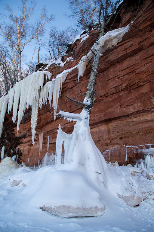 . A tree that fell over a cliff along Lake Superior froze in place with help of lake water.  (Pioneer Press: Andy Rathbun)