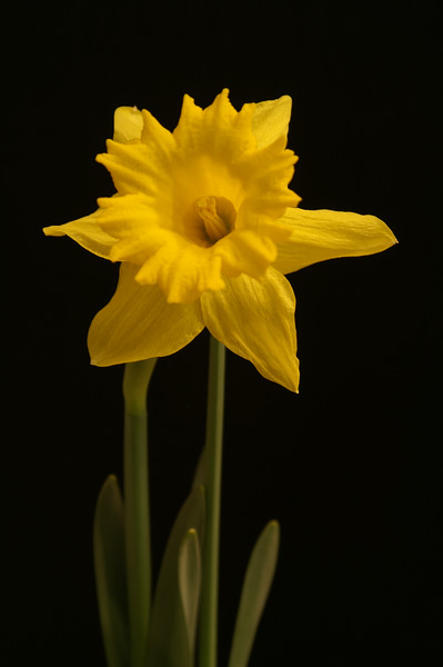 Yel Flower04.jpg