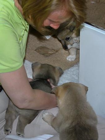 Images from folder 2013-06-08 3e Puppybezoek Markelo