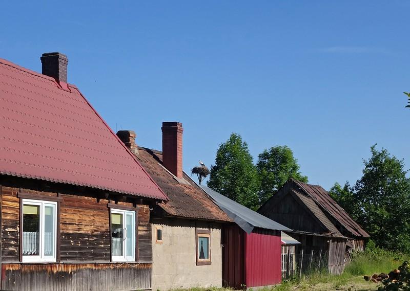 Bialowieza 28-05-18 (376).jpg