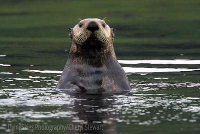 Alaska, seals, birds,and scenics