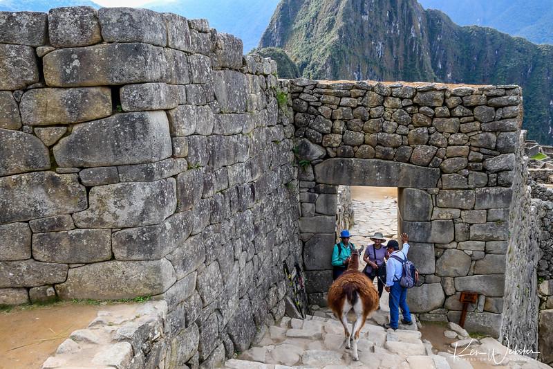 2018 Machu Picchu-63.jpg