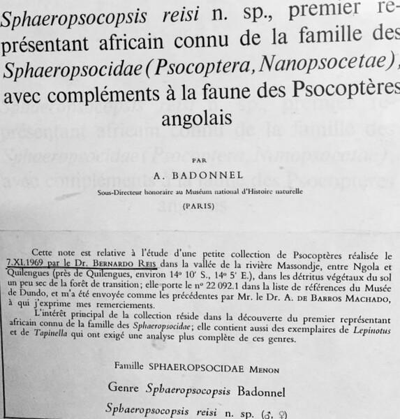 Psocoptères, colhida por Bernardo Reis