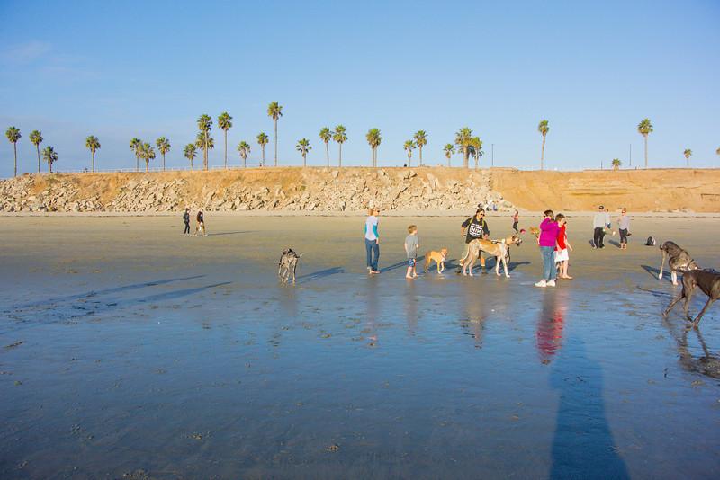 dogs_beach-33.jpg