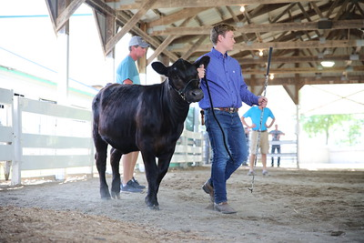 Open Youth Beef Show