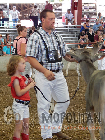 Wisconsin State Brown Swiss 15