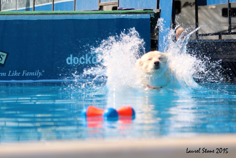2015.8.5 Winnebago County Fair Dock Dogs (18).JPG