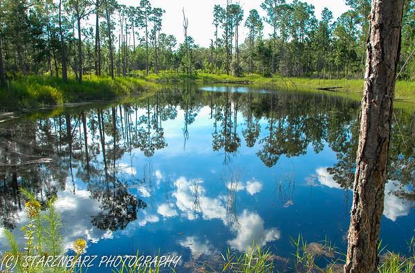 Seminole Forest