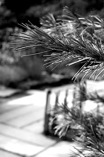 Portland Japanese Garden and home garden March 15, 2014