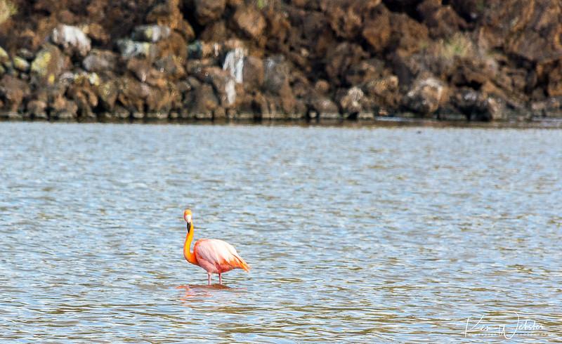 2018 Punta Cormorant-14.jpg