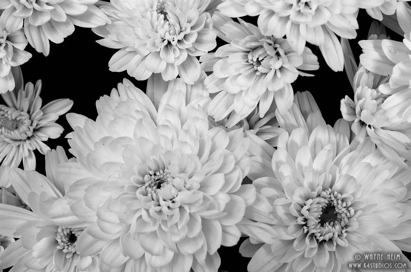 White Flowers    Black and White Photography by Wayne Heim