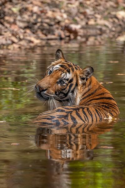 India_April_2019-1061.jpg