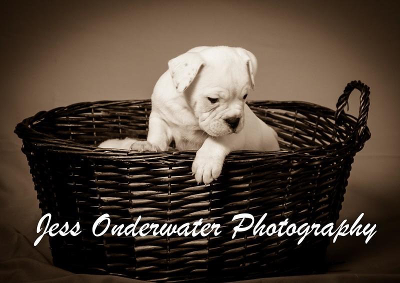 puppies wm-0361.jpg