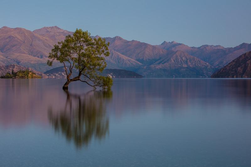 That Tree Dawn, Wanaka