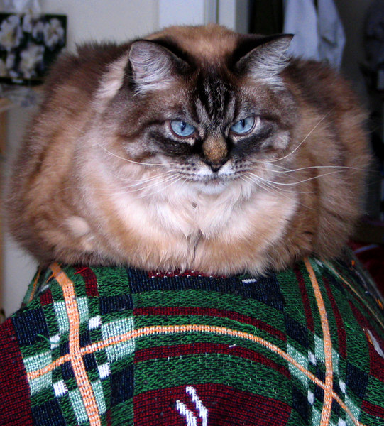"""Pudge dealing with her """"Cabin Fever"""" staring out the front door."""