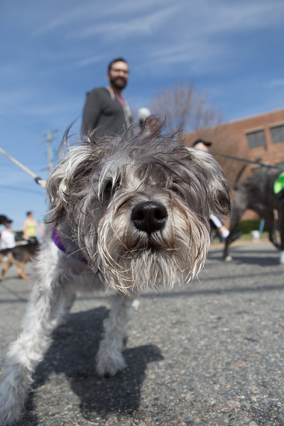 15thRichmondSPCADogJog-501.jpg