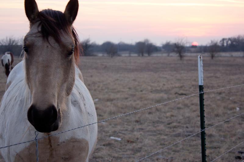 140817, Horse LPF.jpg