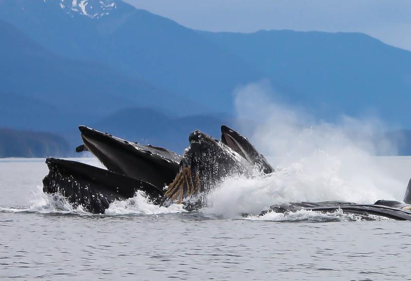 Whales 2 Rick Nelson.jpg