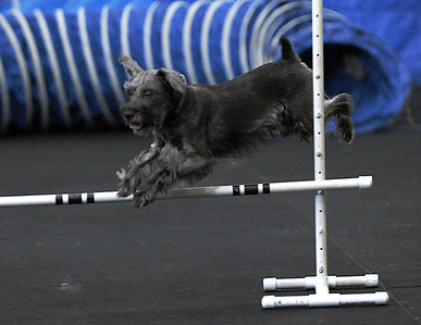 CanineAthletics
