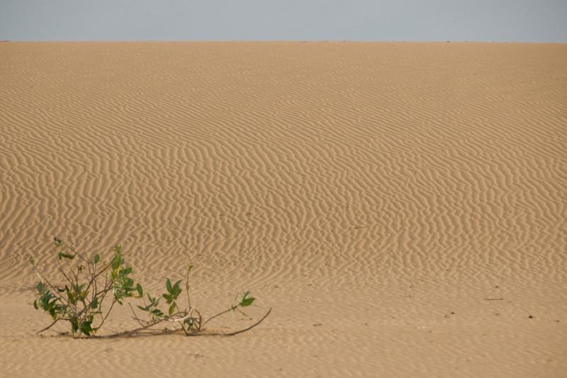 Wide shot of the white sand dunes - Mui Ne, Vietnam
