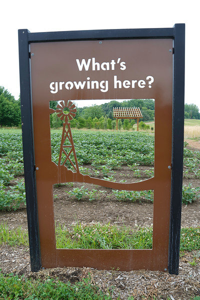 Arboretum, July Harvest-107.JPG
