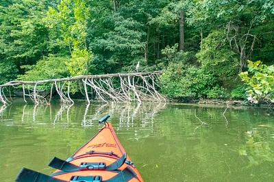 Phoebe goes Kayaking