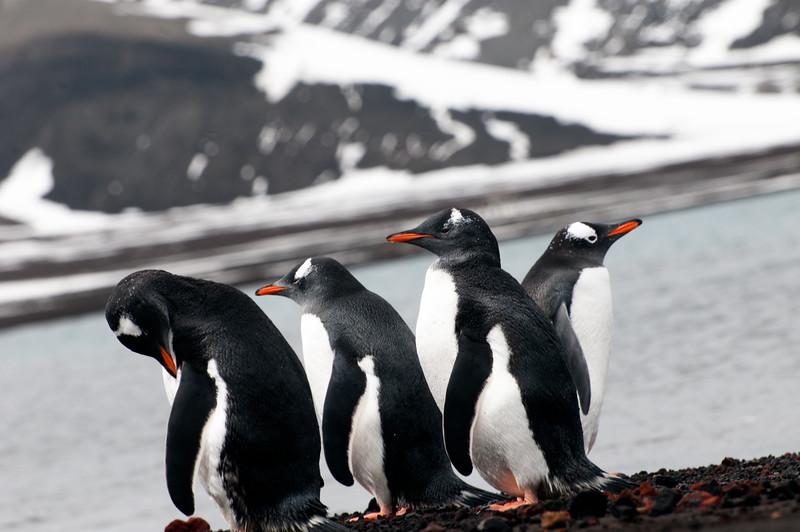 Antarctica 2015 (92 of 99).jpg