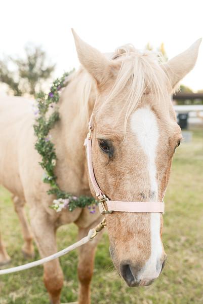 Equestrian Birthday Tea Tikkido (73 of 84).JPG