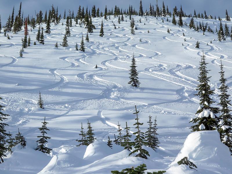 Kootenay Powder Tracks.jpg