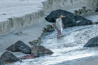 April 25, 2021 - World Penguin Day