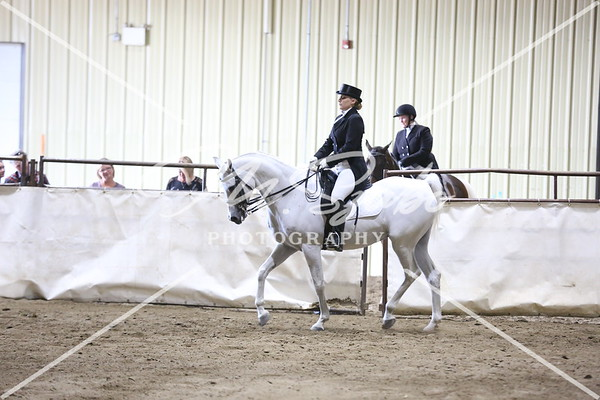 Sport Horse Under Saddle Part 2