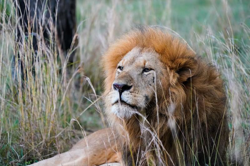 safari-2018-63.jpg