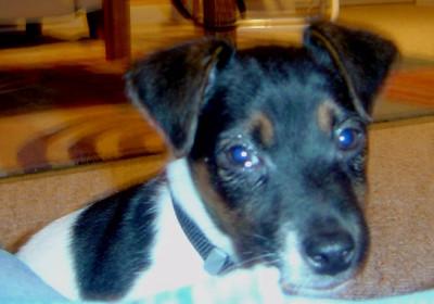 Puppy Antics-The First Year-2007