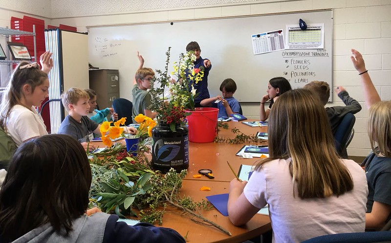LATO OV OA botany 20-02-06 - 1.jpg