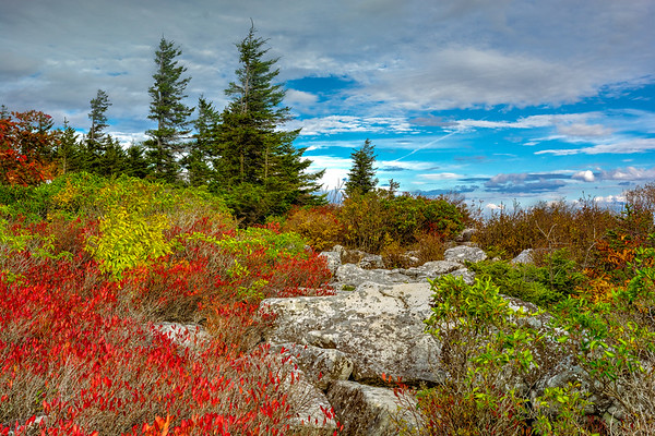 Dolly Sods, WV (32 Images)