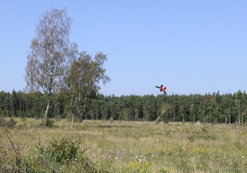 20190727_Saaremaa_Reo_032_2000.jpg