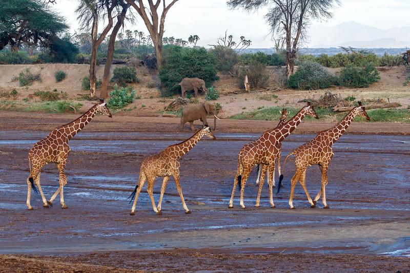 Kenya 2015-00205.jpg