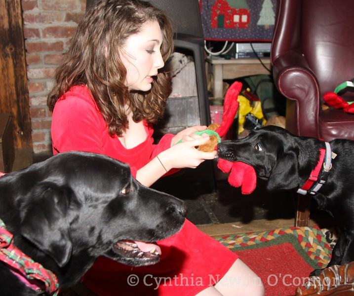emily and dogs christmas cards 049.JPG